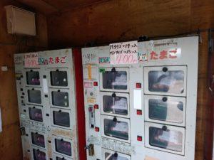 福岡 筑前町 ゴトウのヒヨコ 卵の自動販売機 中