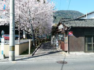 琴参閣 桜並木
